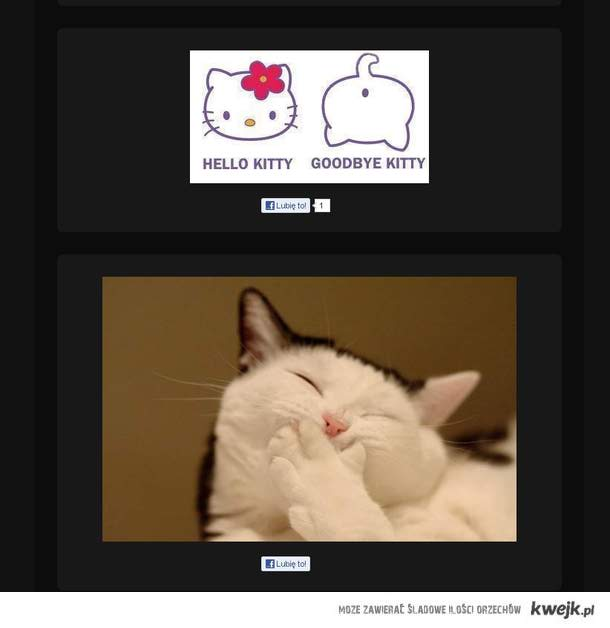 Koty znalezione w poczekalni