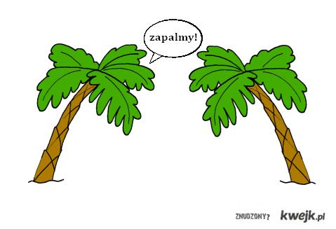 Palma do palmy