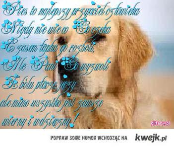 psia prawda