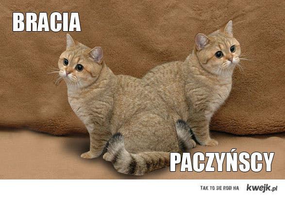 Bracia Paczynscy
