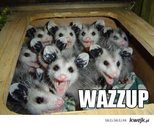 Wazaaa