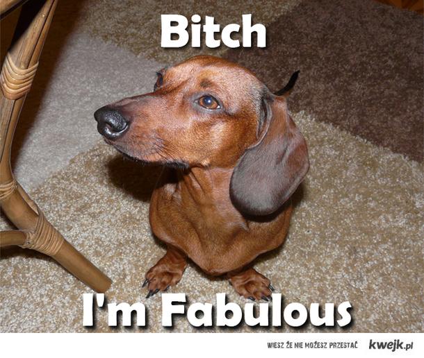 Ridiculously Photogenic Sausage Dog