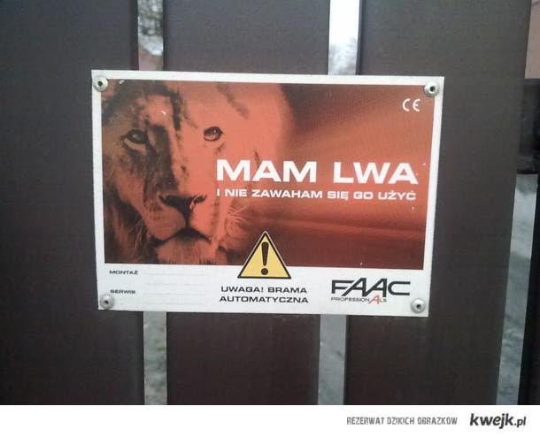 Mam lwa i nie zawaham się go użyć...