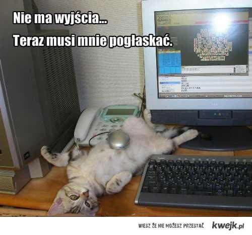 głaskanie kotka