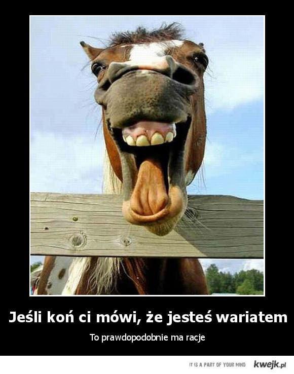 koń wariat