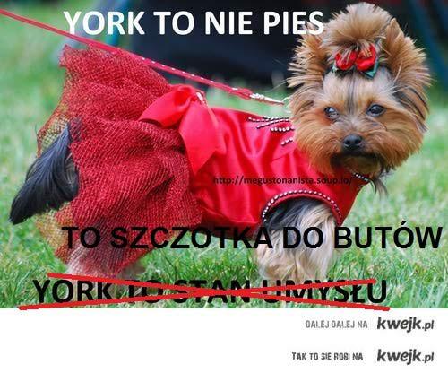 york2