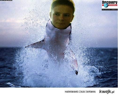 Sharkin