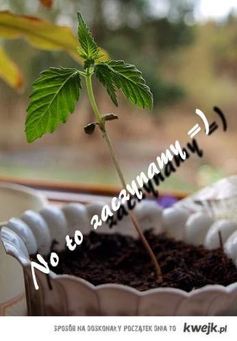 roślinka*.*