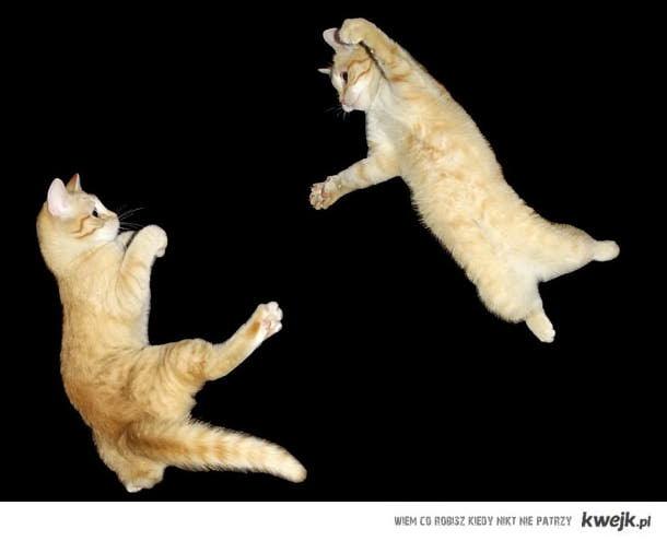 Cat fight :)