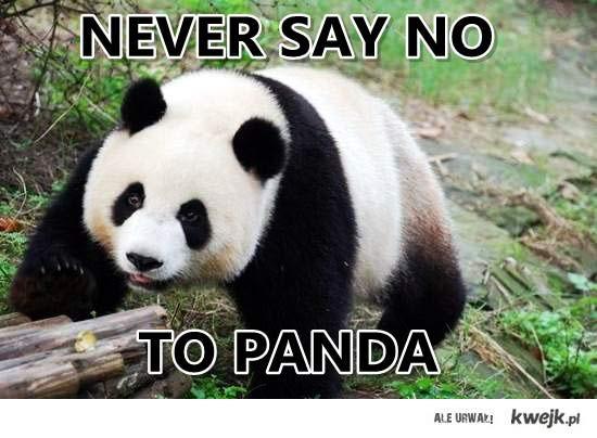 "Never say ,,no"" to PANDA"