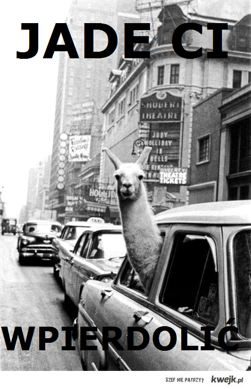 lama jedzie