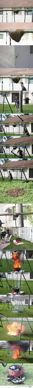 czlowiek vs pszczoly