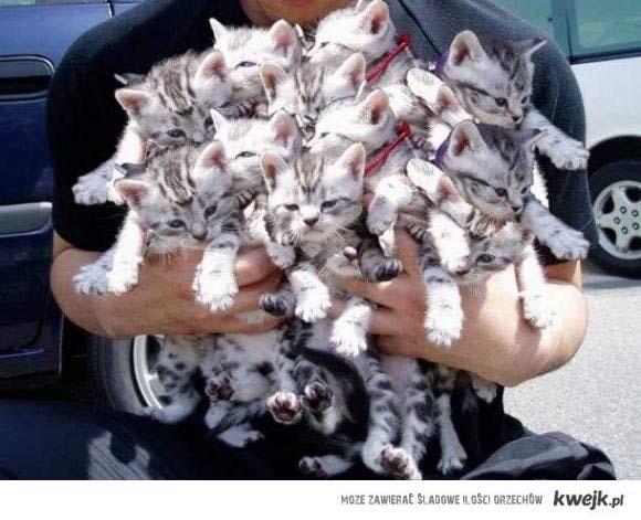 Ile kotóów. *___*