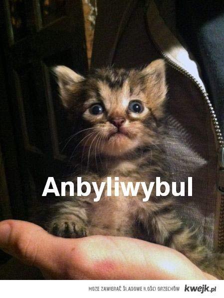 anbyliwybul kotek