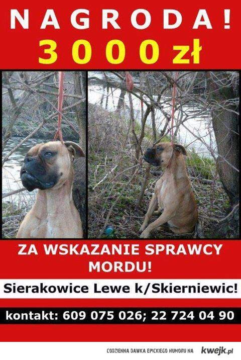 Pomóż nam znaleźć sprawcę!
