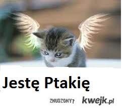 Kot z skrzydłami