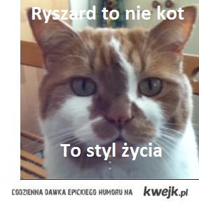 Kot Rysiek