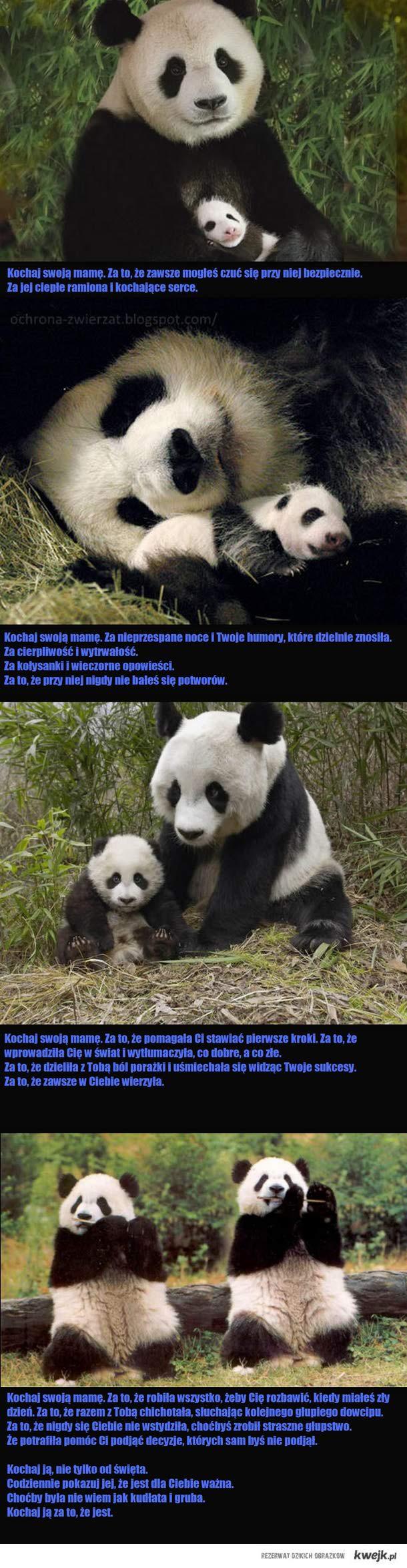 coś o pandziej (i nie tylko) mamie