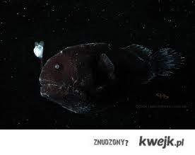 Nie szukaj światła w ciemności bo to może być ryba głebinowa!