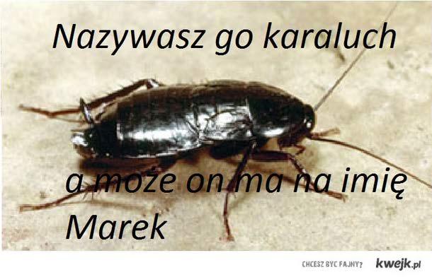 karaluch marek