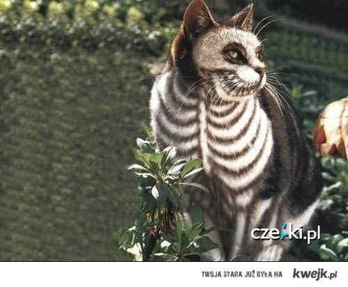 zombie cat