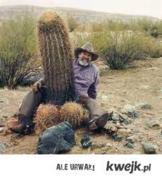 Duuuuży kaktus