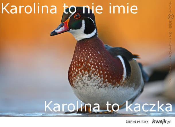 Karolina to nie imię  Karolina to Kaczka