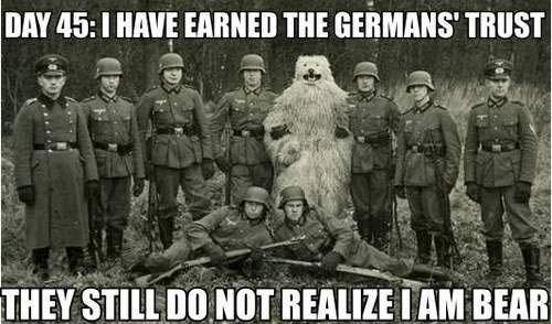 niedźwiedź