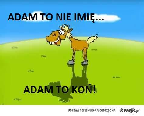 adam koń