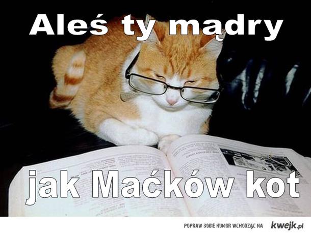 jak maćków kot ....