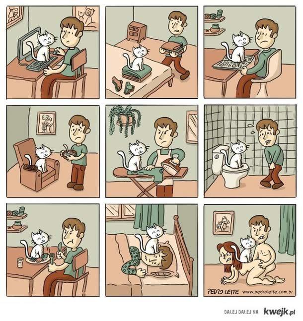 upierdliwy kotek