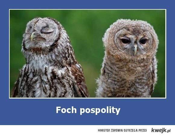 Foch pospolity