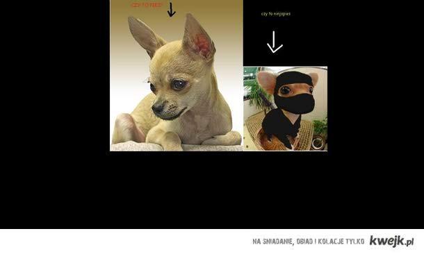 ninjapies
