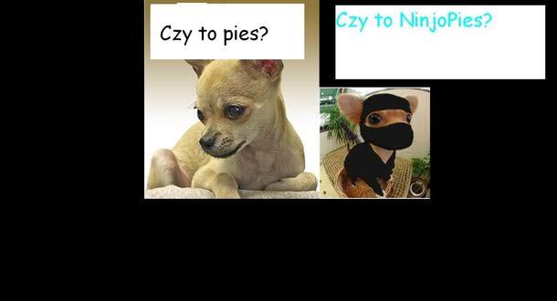 ninjapies?