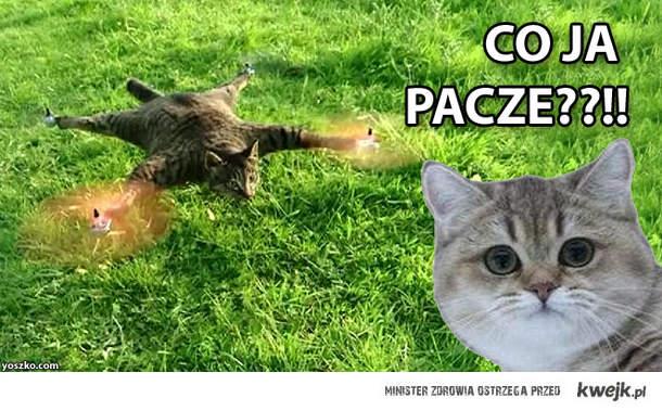 coptercat