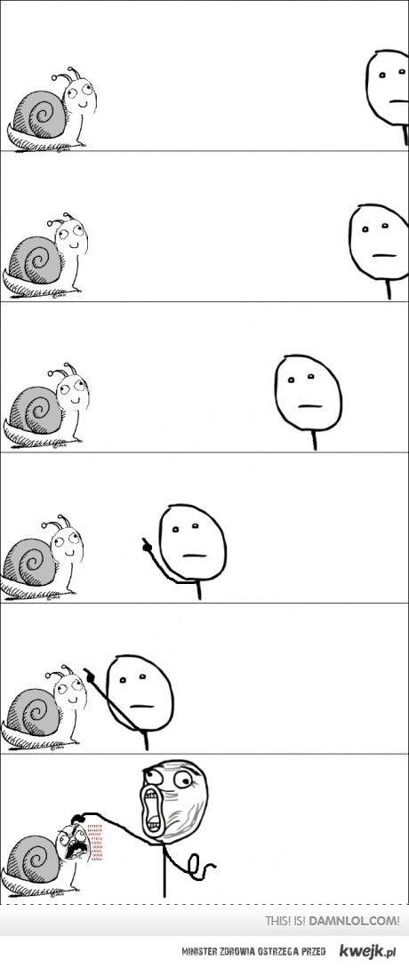ślimak, ślimak