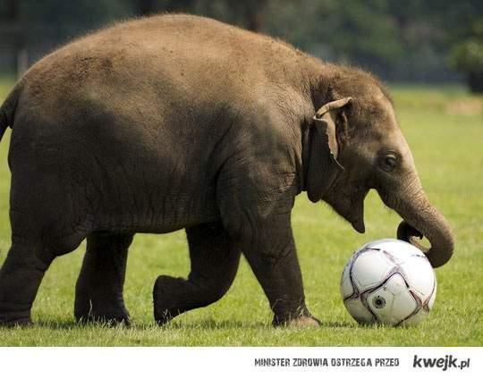 słonik i piłka