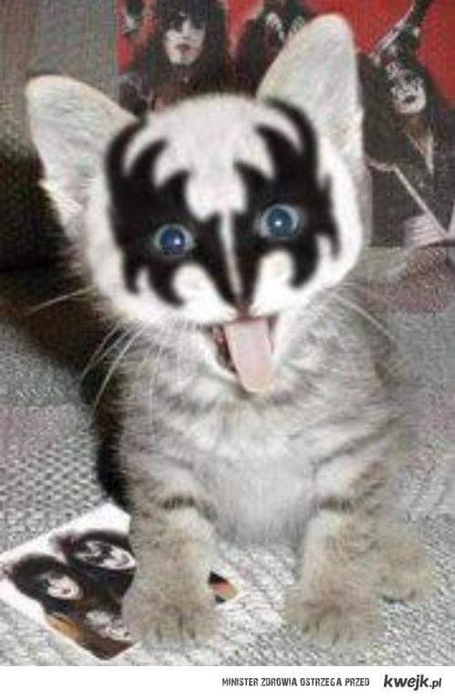 Kot fanem muzyki