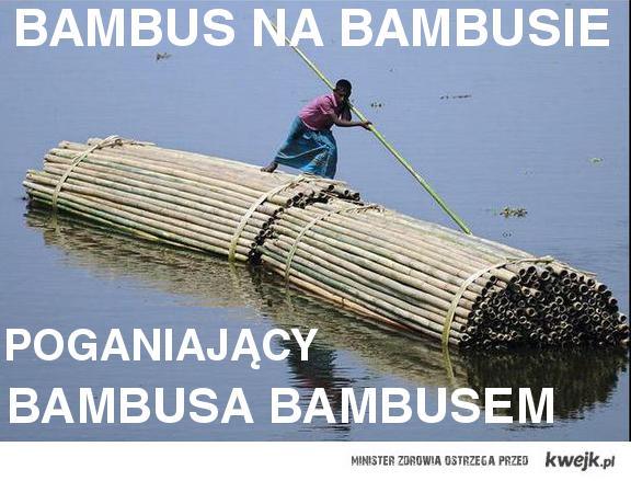 bambus na bambusie