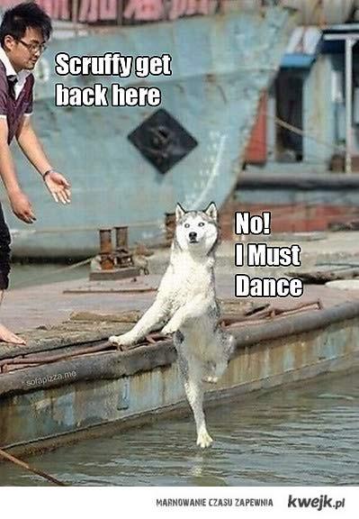 pies tancerz