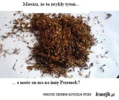 Mówisz, że to zwykły tytoń... A może on ma na imię Pszemek?