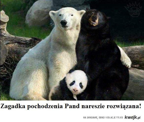 pochodzenie pandy