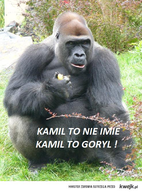 goryl .