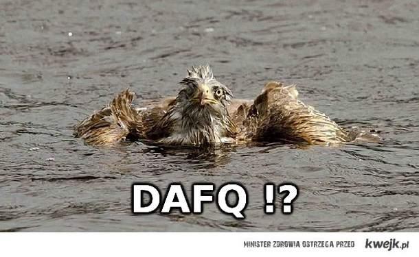 dafq ?!