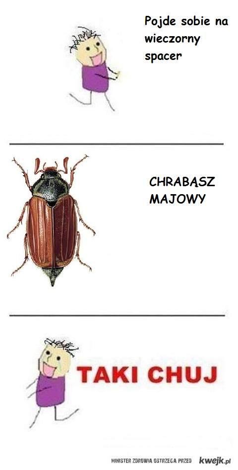 Chrabasz majowy