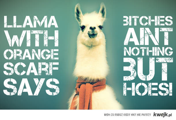 Llama with scarf says....