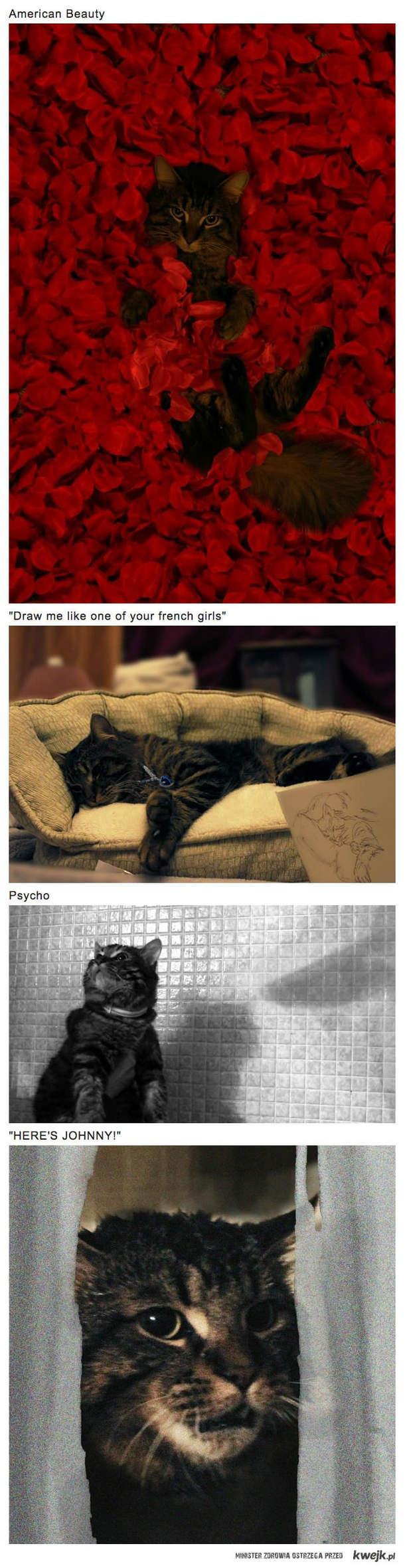 Filmowe koty