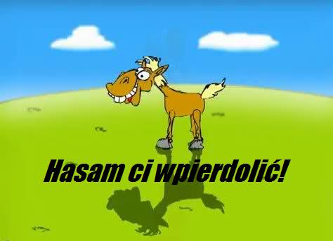 Koń rafał koń rafał nanananrira koń rafał
