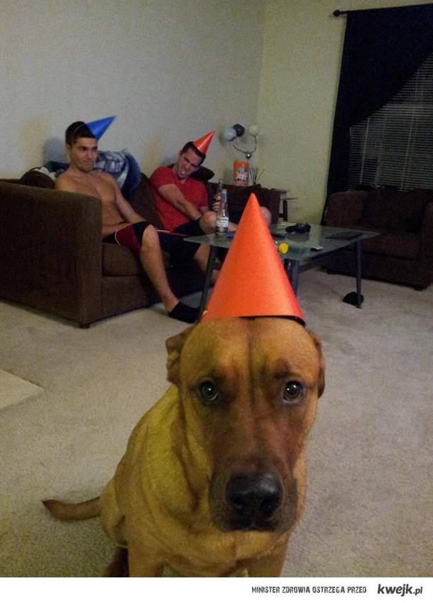 A pies źle się bawi
