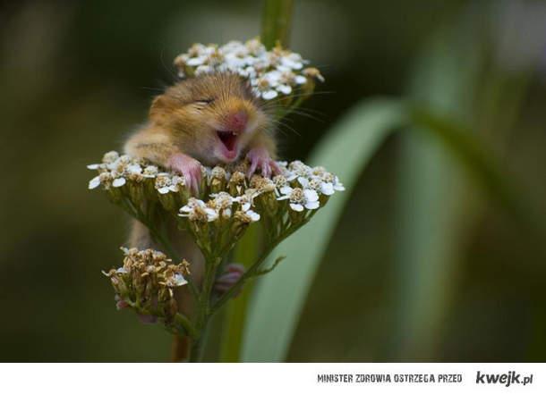 hamster-loves-flowers :)